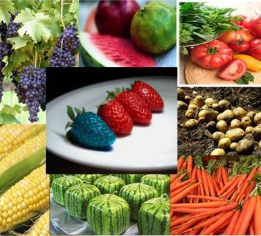 Данные последних исследований опровергают утверждения о вреде ГМО для организма